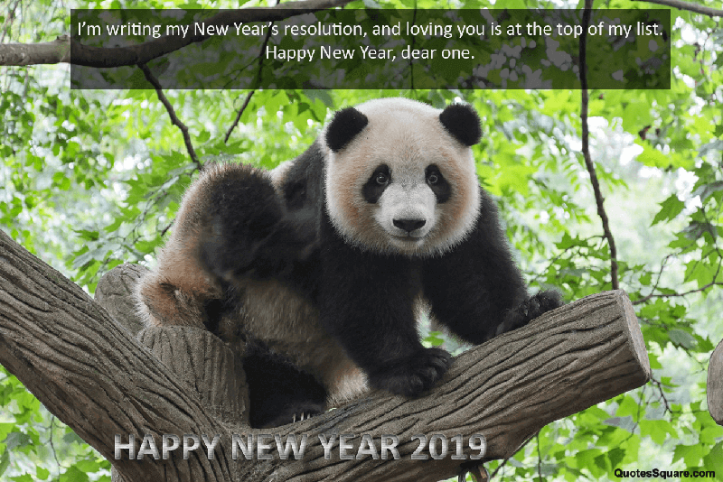 New Year 2019 Teddy Bear Wishes Image Happy New Year 2019 Quotes